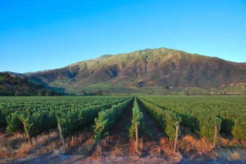 Chilensk vinmässa
