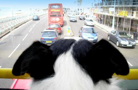 Inför Alla hundars dag - tips till dig som reser med hund!