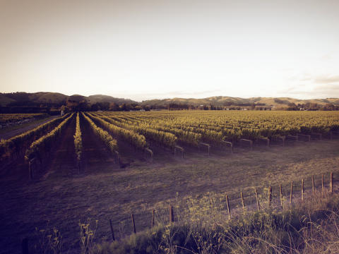 Vineyard, Marborough New Zealand, Matua Wines