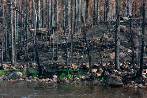 Tre miljoner kronor till att mäta hur skogsbranden påverkar vattenmiljön
