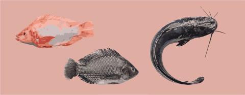 Banbrytande koncept för fiskuppfödning som integreras i det svenska lantbruket