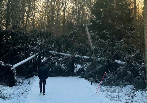 Stormskadade staket och plank – vad gäller?