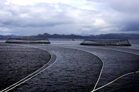 Norwegian seafood exports for the first six months of 2016