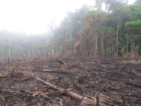 Skovrydning-2