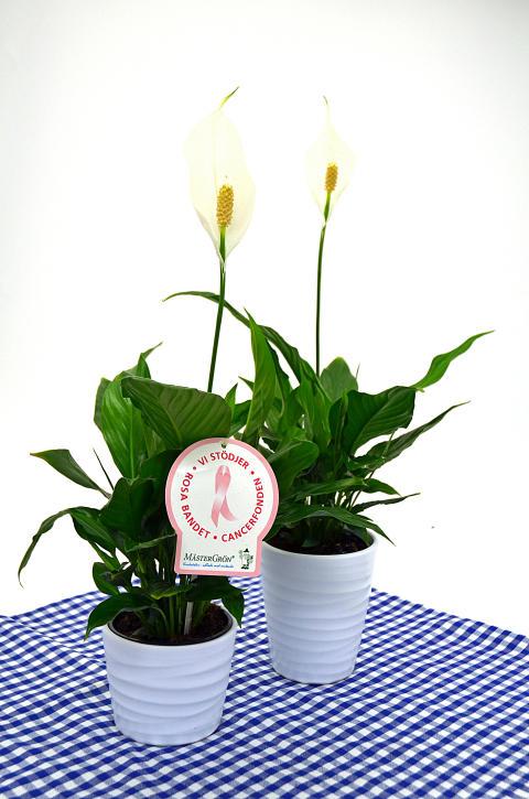Dagens Rosa Produkt 23 oktober - en Fredskalla från Mäster Grön