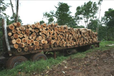 Bauminvestments statt illegale Abholzung der Tropen
