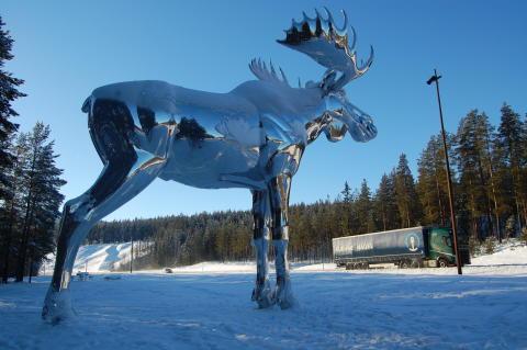Größter Elch der Welt im Winter