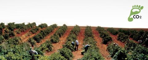 Bodegas Campo Viejo, den første spanske vingården til å sertifisere sine karbonutslipp