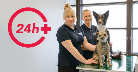KUTSU: 24h päivystävä eläinsairaala avataan Tampereella