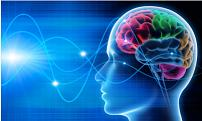 Kom med ind i hjernen på forbrugerne med Neuroscience