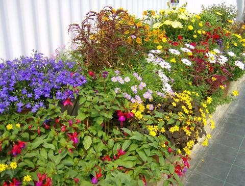 Topp 10 blomstrende planter for sommeren