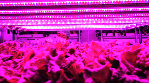 Panasonic Contributes to Singapore's Self-Sufficiency Level of Vegetables with First Indoor Vegetable Farm