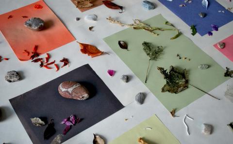 (X) Sites, Rachel Barron art 2 Botanical Study