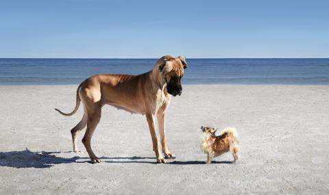 Hundar promenerar för välgörenhet