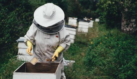 Plötsligt vill alla bli experter på bin