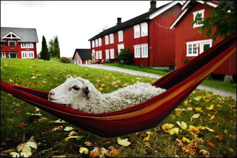 Norge får fyra nya gröna, hållbara destinationer