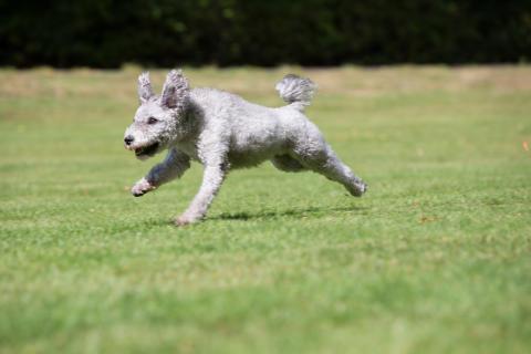 Full fart med hunden Nissa
