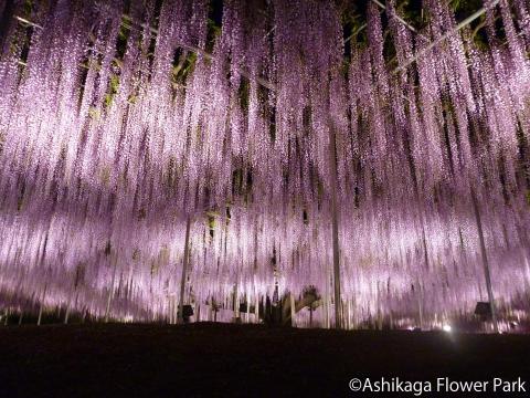 Ashikaga Flower Park(2)