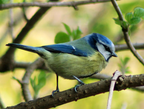 Center Parcs celebrates bird song