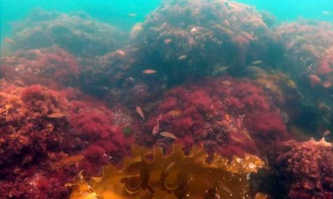 Seaweed Market Share, Trends, Business Strategy and Forecast to 2027