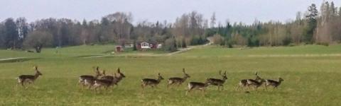 Skyddsjaktsansökningar för klövvilt ökar drastiskt i Östergötland