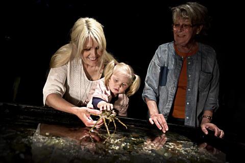 Besökare vid Havets Hus klappakvarium