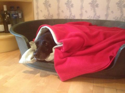 Gott nytt hundår med lugnande feromoner