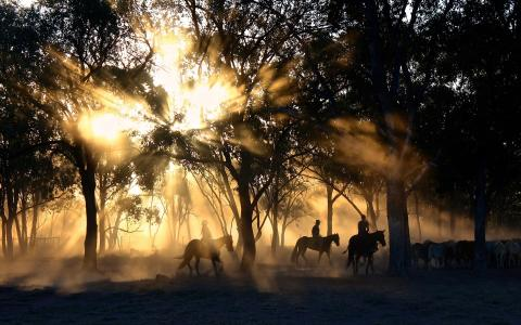 Auf einer Pferdefarm im Ausland leben & arbeiten