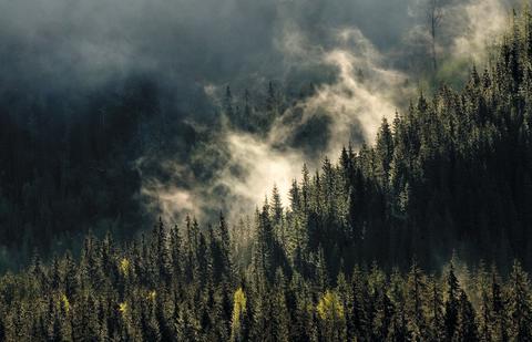 Statskogs skogvirksomhet