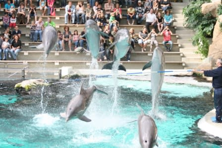 """Delfinkalb stirbt nach nur einer Woche  - WDSF kritisiert """"Ferrari-Show"""" im Zoo"""