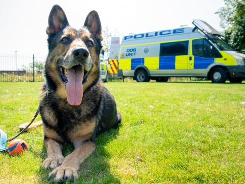 Sussex Police first force to celebrate Finn's Law with the star of the show himself