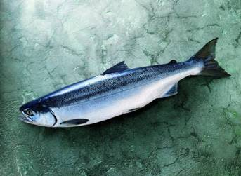 Alaska sockeye harvest now 40% off forecast