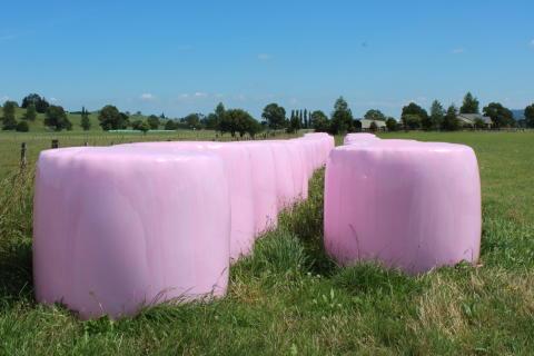 Rosa höbalar ger 300 000 till bröstcancerforskning