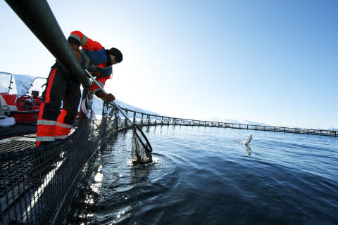 A solid July for Norwegian seafood exports