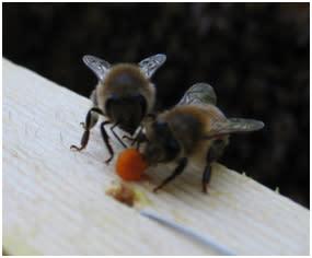 INBJUDAN - Lansering av vild färsk honung