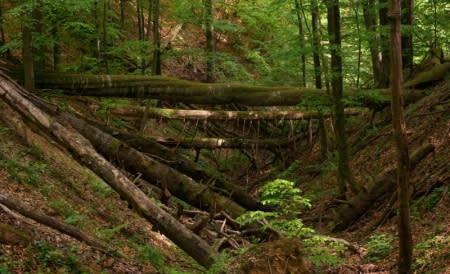 Rädda den transsylvaniska urskogen!