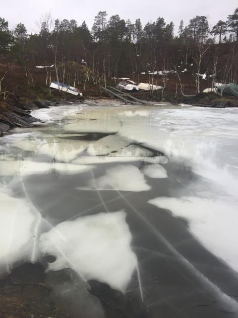 Tynn og dårlig is i lavlandet, etter det siste mildværet. Melkevatnet i Ballangen. Foto: Arild Bondestad.