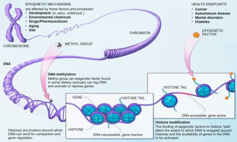 Epigenetics Market Latest Trends, Demand and Advancement 2018 to 2025
