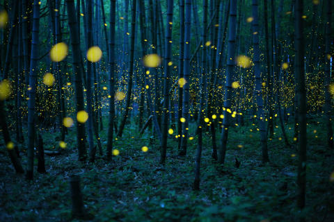 Enchanted Bamboo Lights, fot. Kei Nomiyana