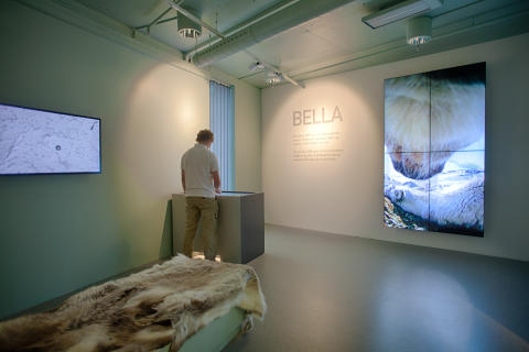 Ausstellung Norwegisches Wildrentierzentrum