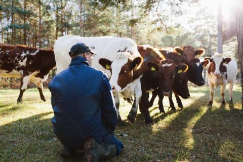 Bättre ekonomiskt resultat för jordbruket 2019