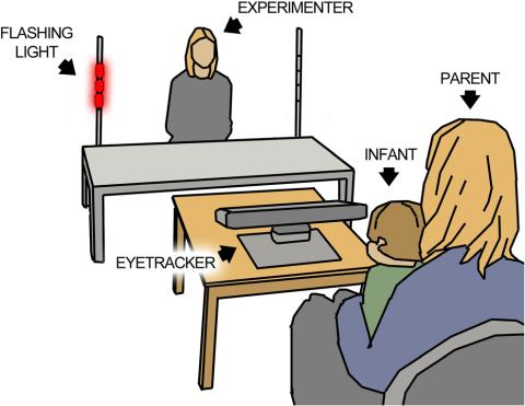 Illustration of the experiment designed to assess initiation of joint attention in infancy.