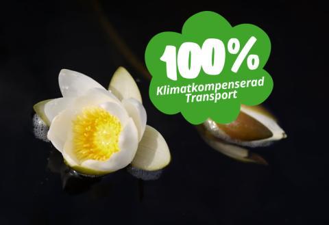 Best Transport klimatkompenserar nu sina transporter till 100%