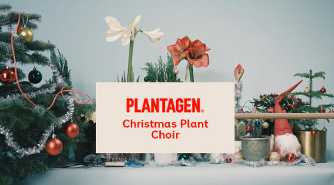 Plantagen Christmas Plant Choir stillbild