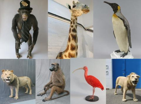 Help needed to trace stolen stuffed animals
