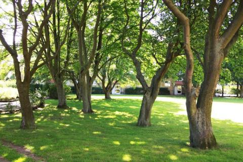 Helsingborgshem slutar skicka pappersavier – Planterar ett träd för var 100:e hyresgäst som byter betalsätt