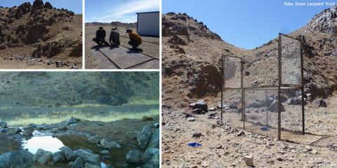 Internationella Snöleopard-dagen: Snöleopard-experten bygger stängsel i Gobiöknen