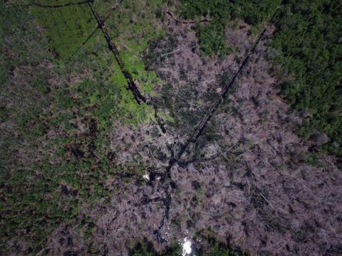 Palmeoliegigant sagsøger RSPO for beskyldninger om skovrydning
