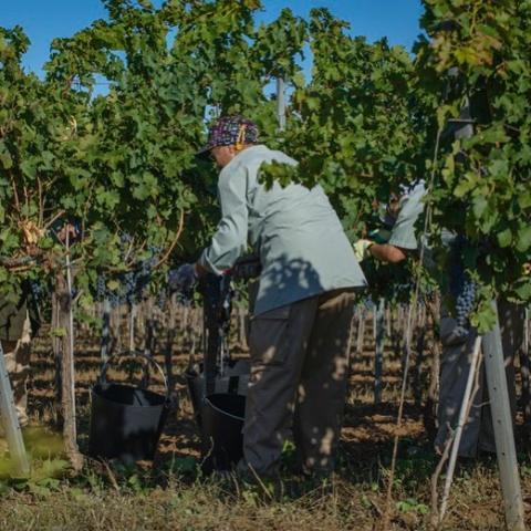 Bodegas Torres erbjuder den 'Bästa upplevelsen inom vinturismen' enligt Drinks International