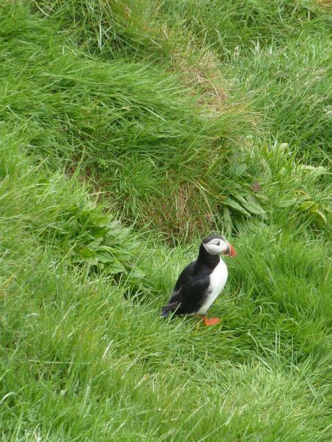 Nyhet med Temaresor: Fotoresa på Island
